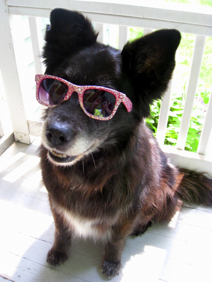 black border collie dog wearing ray ban sunglasses