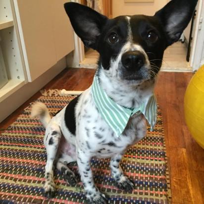 DIY upcycled collared dress shirt dog collar craft