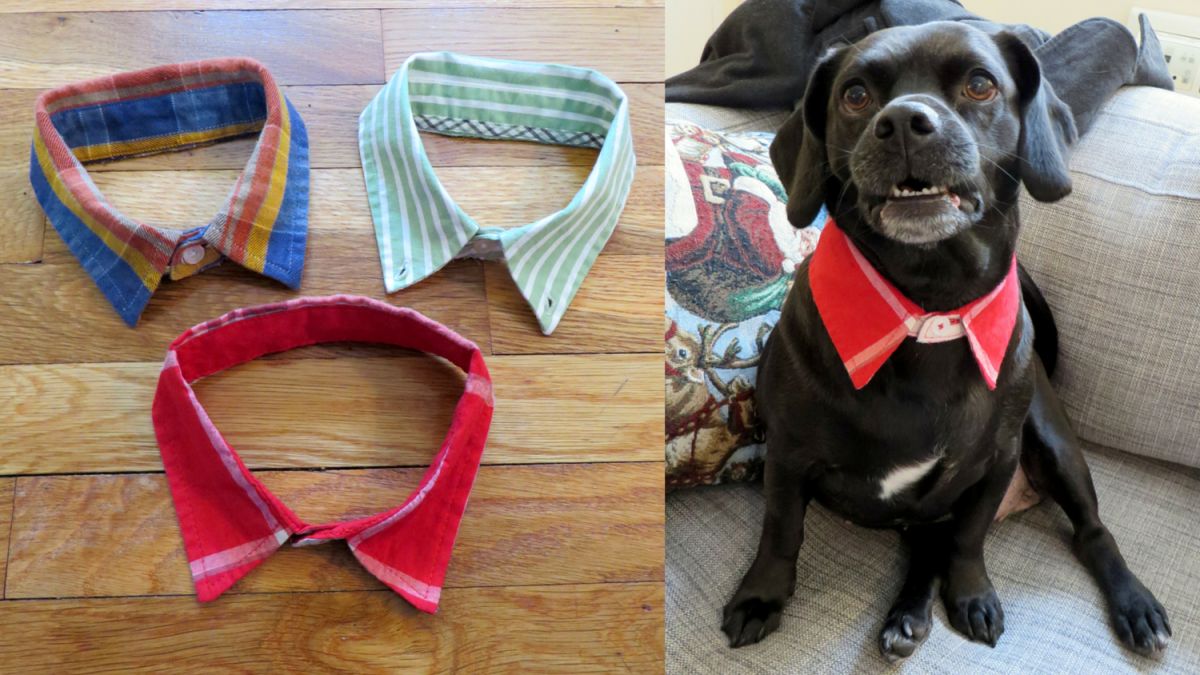 DIY Doggie Dress Shirt Collar