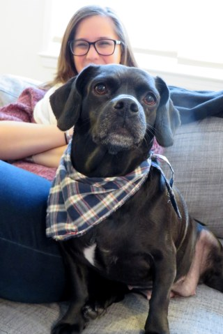 DIY dog bandanna from upcycled shirt craft