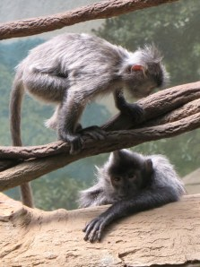 Monkeys in the Bronx Zoo - New York City