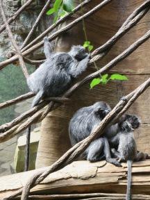 Monkeys in the Bronx Zoo - New York City