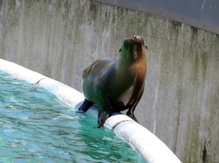 Sea lion in the Bronx Zoo - New York City