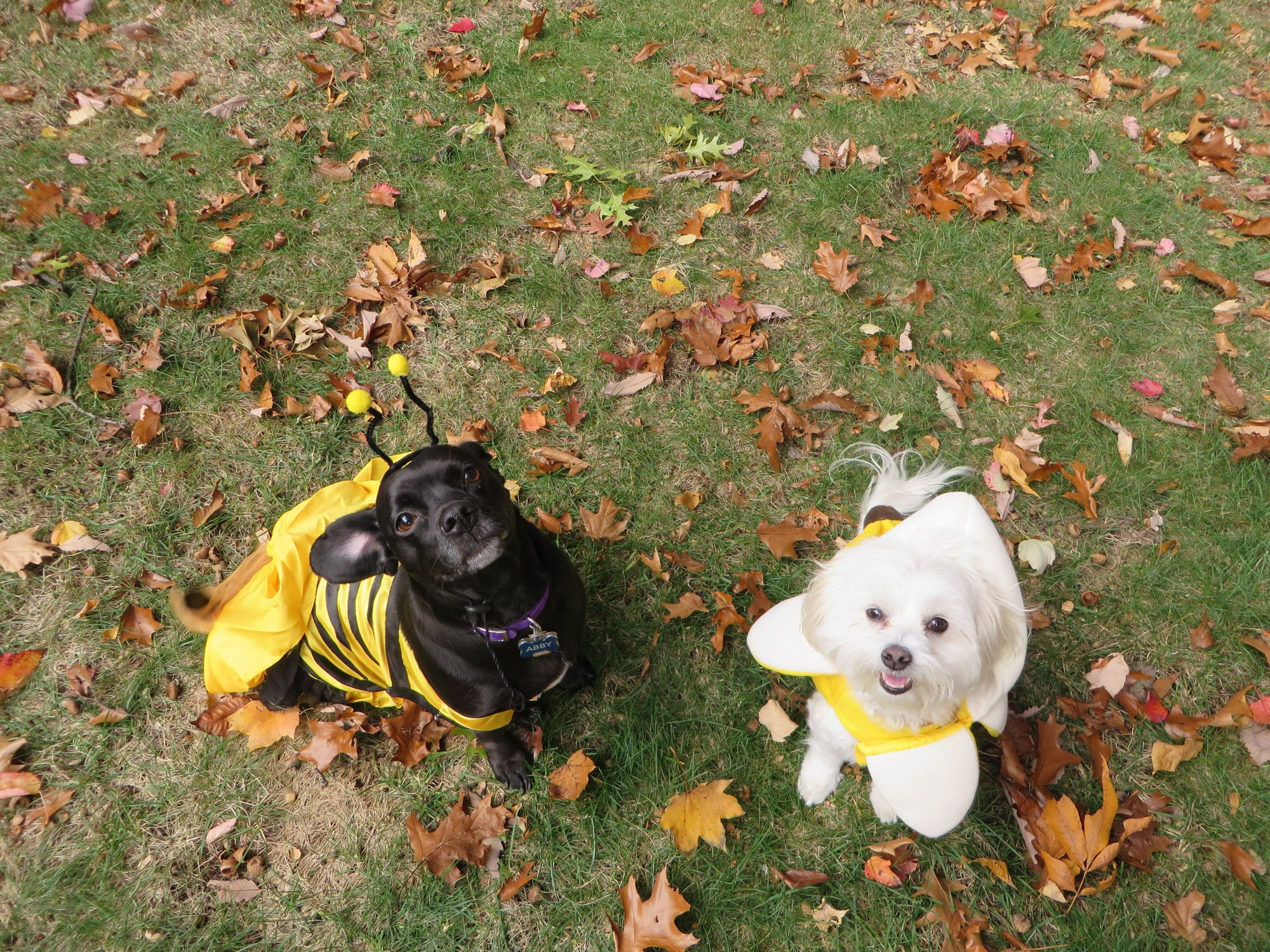 Buzz buzz, Abby is a bee