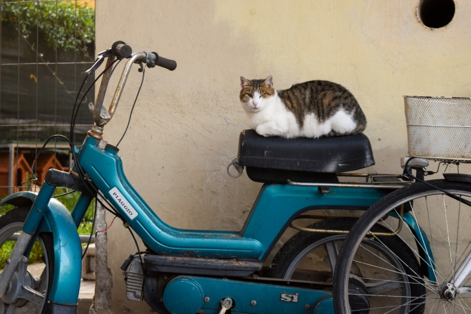 Cat sitting on a bike in Lucca, Italy | The Cheerful Times